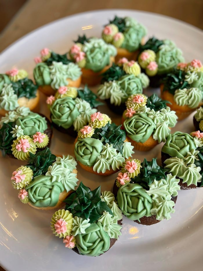 Succulant Cupcakes | 3 Sweet Girls Cakery