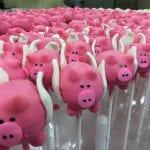 Flying Pig Cake Pops